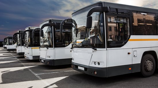 White coach buses parked in a row